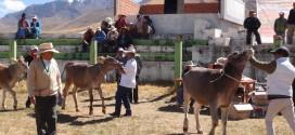 SANTA ROSA: LI feria nacional agropecuaria, agroindustrial, artesanal de expocision y remate de ganado de camal y reproduccion SANTA ROSA – FEGASAR 2016.