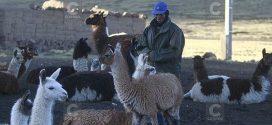 Senamhi advierte descenso de temperatura de hasta 15 grados bajo cero