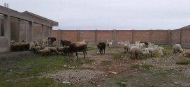 AYAVIRI: Detienen a presuntos abigeos en Santa Rosa de Melgar