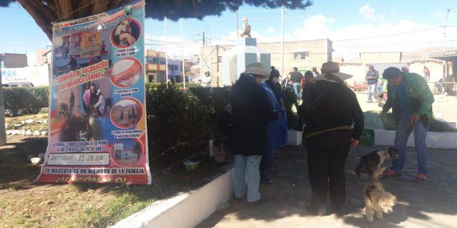 AYAVIRI: 84% DE POBLACION CANINA FUE INMUNIZADA EN LA CAMPAÑA DE VACUNACION ANTIRRABICA EN AYAVIRI.
