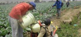 Existiría riesgo de cáncer por exposición de pesticidas en los alimentos