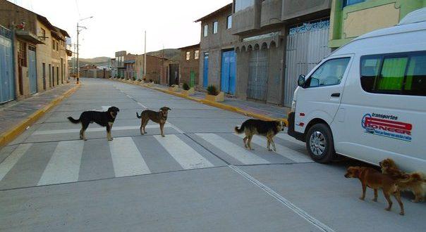 Perros callejeros son un peligro para los niños de Ayaviri